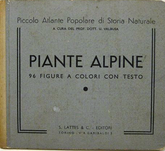 Piantealpine